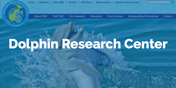 dolphin_research_overlay.png